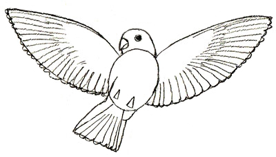 Как рисовать птиц, шаг 5