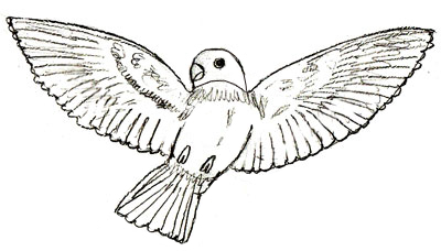 Как рисовать птиц, шаг 6