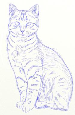 Как нарисовать кота, шаг 6