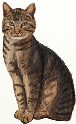 Как нарисовать кота, шаг 7
