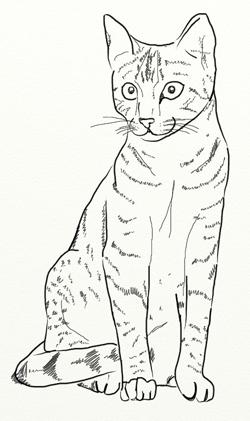 Как нарисовать кошку, шаг 5