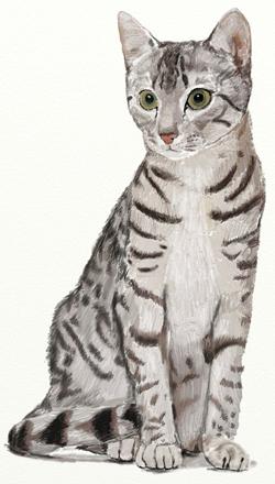 Как нарисовать кошку, шаг 6