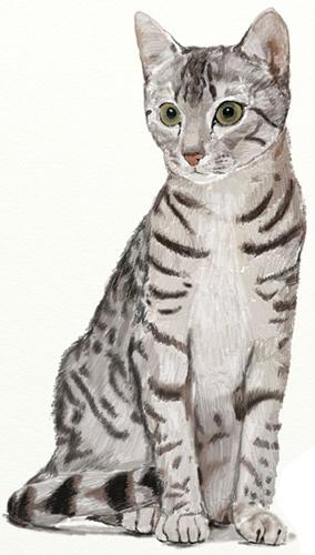 Рисунок кошки поэтапно на планшете