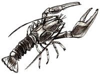 Рисунок Рака поэтапно карандашом
