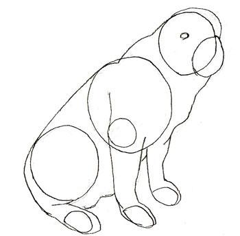 Как рисовать собаку поэтапно, шаг 3