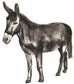 Учимся рисовать осла