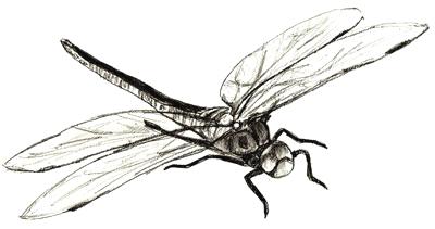 Как нарисовать стрекозу, шаг 6