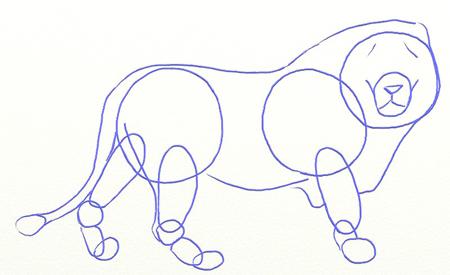 Как нарисовать льва, шаг 3