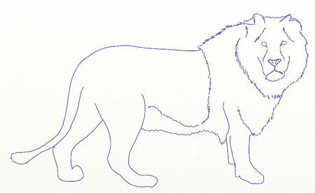 Как нарисовать льва, шаг 4