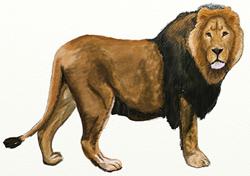 Рисунки животных - Лев