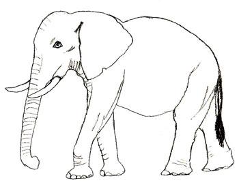 Как нарисовать слона, шаг 5