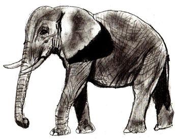 Как нарисовать слона, шаг 6
