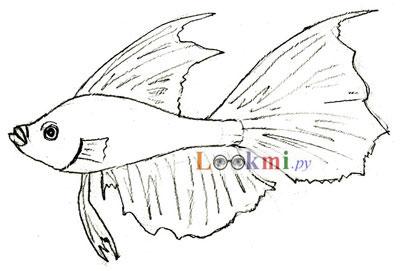 Как рисовать рыбу, шаг 5