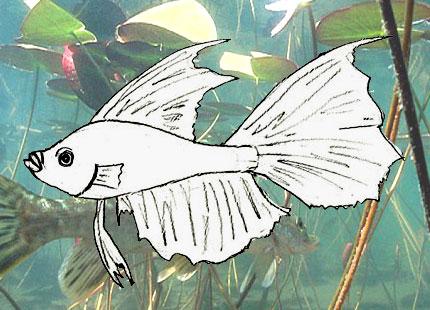 Как рисовать рыбу поэтапно