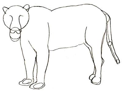 Как нарисовать ягуара, шаг 4
