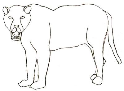 Как нарисовать ягуара, шаг 5
