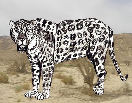 Как нарисовать ягуара поэтапно