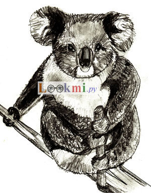 Как нарисовать коалу, шаг 7