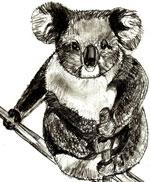 Как научиться рисовать медведя коалу