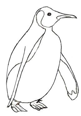Как нарисовать пингвина, шаг 5
