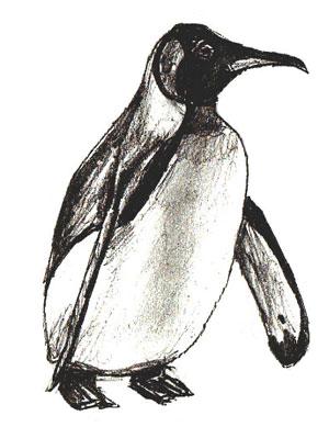 Как нарисовать пингвина, шаг 6