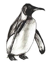 Простой пошаговый рисунок пингвина