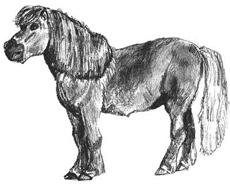 Как научиться рисовать Пони