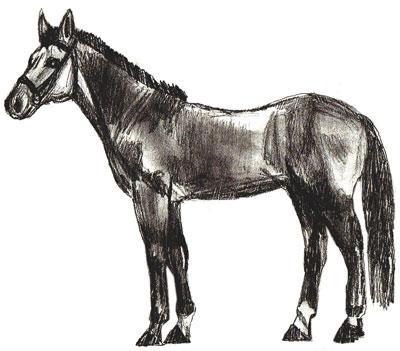 Как нарисовать лошадь, шаг 6