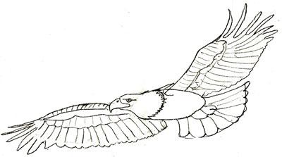 Как нарисовать орла, шаг 5