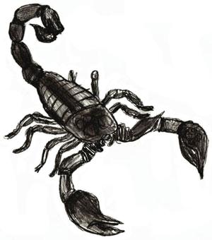 Как нарисовать скорпиона как научиться рисовать карандашом Как рисовать как рисовать животных