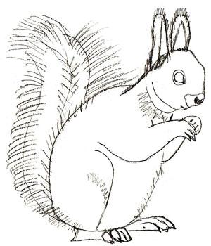Рисунок белки карандашом, шаг 5
