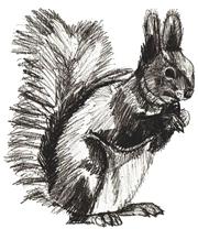 Рисунки животных - Белка