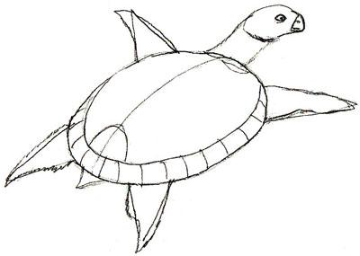 Как нарисовать черепаху, шаг 4