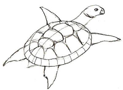 Как нарисовать черепаху, шаг 5
