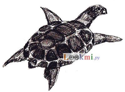 Как нарисовать черепаху, шаг 6