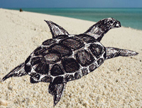 учимся рисовать черепаху