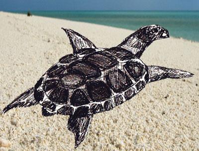 Нарисовать черепаху поэтапно - 7f4d