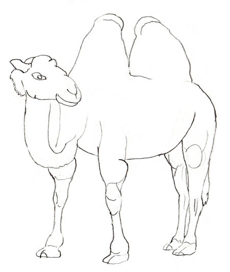 Как нарисовать верблюда, шаг 5