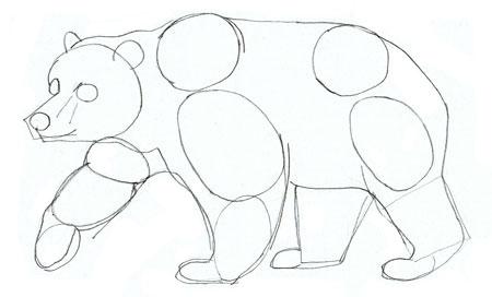 Как нарисовать медведя, шаг 4