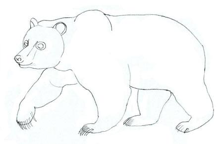 Как нарисовать медведя, шаг 5