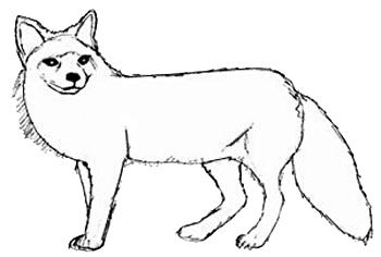 Мордочки животных раскраска 3