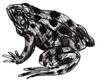 Рисунки животных - Лягушка