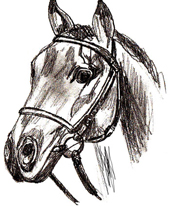 Рисунок Головы Лошади