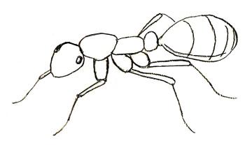 Как нарисовать муравья, шаг 4