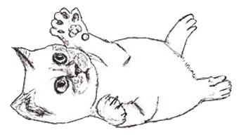 рисунки котят
