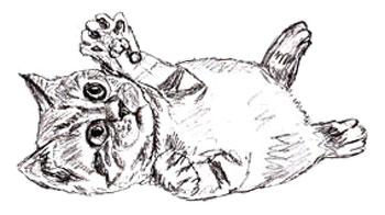Как нарисовать котенка, шаг 5