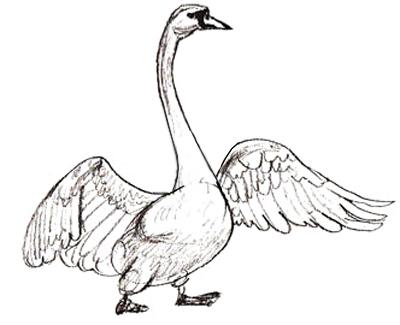Как нарисовать лебедя, шаг 5