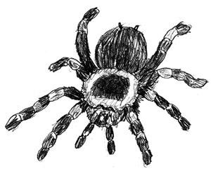 Как нарисовать паука, шаг 5
