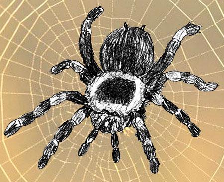 Как нарисовать паука поэтапно