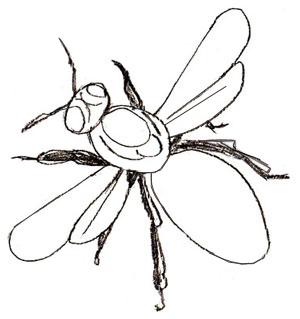 Как нарисовать пчелу карандашом как научиться рисовать карандашом Как рисовать как рисовать животных